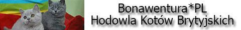 bonawentura-baner